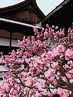 """Картина по номерам. Art Craft """"Японская вишня"""" 40*50 см 10527-AC"""