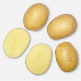 Семенной картофель  Актриса  1 кг ранний 1 репродукция  AgroPlant