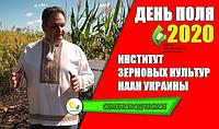 День Поля в институте зерновых культур НААН 2020 / Днепропетровская область.