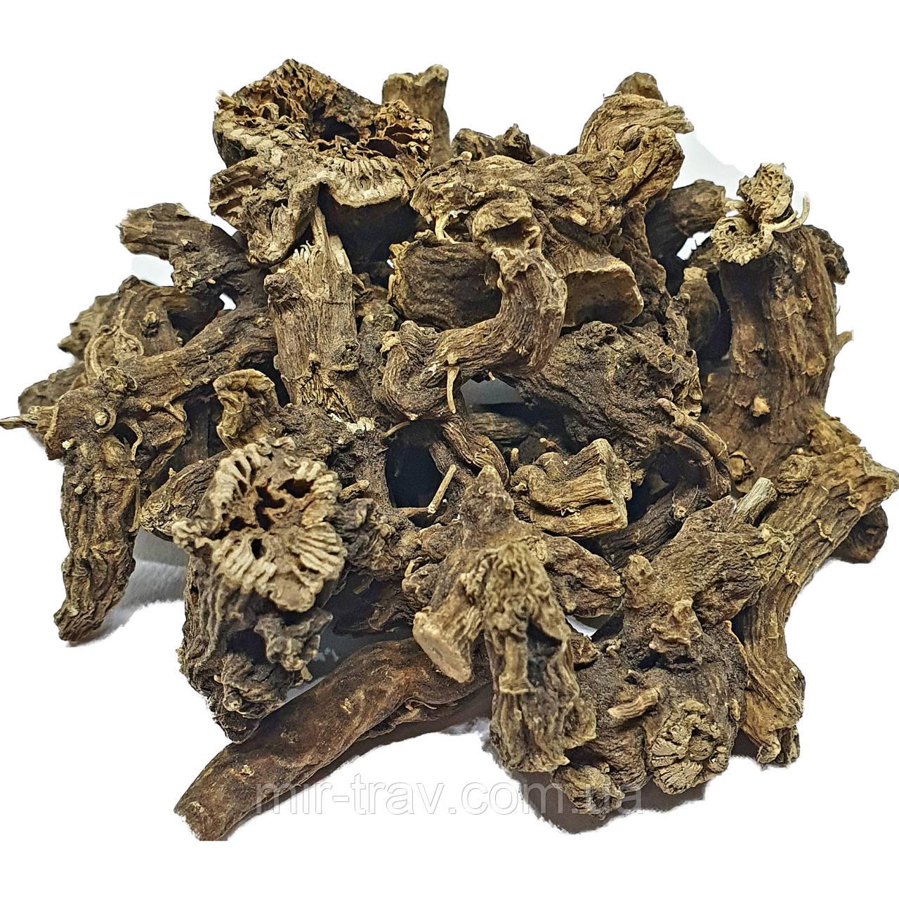 Норичник узловатый корень (шишковатый)