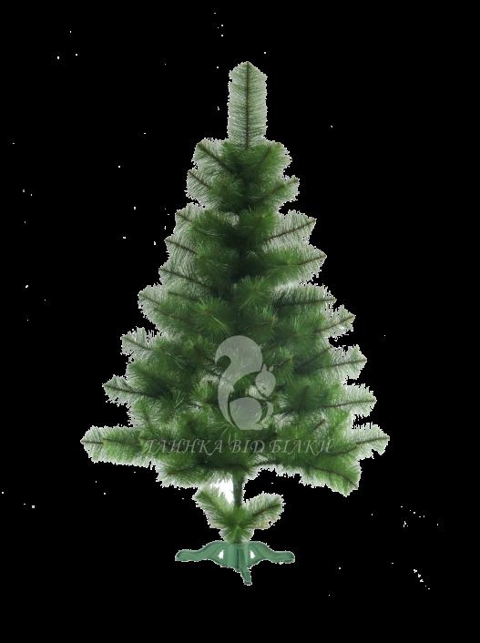 Сосна новогодняя (Сосна новорічна) Сосна світло зелена