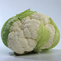 Семена цветной капусты Мисора F1, 1000 семян, Kitano