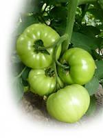 Семена томата КС 10 F1 / KS 10 F1, 1000 семян