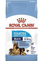 Royal Canin Maxi Starter (Роял Канин Макси Стартер) для щенков крупных пород до 2 месяцев