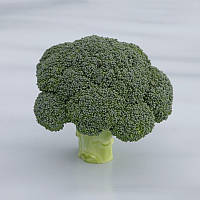 Семена капусты брокколи Батори F1/ Batory F1 (Syngenta) - среднеранний высокоурожайный гибрид