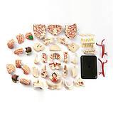 Набор для исследований Edu-Toys Модель черепа с нервами сборная, 9 см (SK010), фото 3