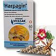 Харпагин (в таблетках) / Harpagin, при заболеваниях суставов, фото 2