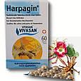 Харпагин Вивасан (в таблетках) / Harpagin, 60 таб, при заболеваниях суставов, фото 2