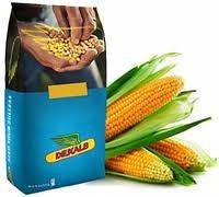 Насіння кукурудзи ДКС 3912 (Мonsanto)