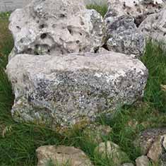 Степняк Крымский