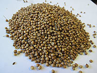 Кориандр зерно 25 кг