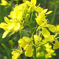 Горчица желтая  Украина 10 кг