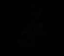 Наклейка на стіну Гілка кавового дерева, фото 3