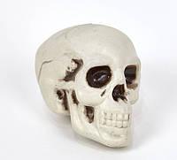 Декор череп муляж на Хэллоуин Halloween, фото 1
