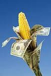 Семена кукурузы Долар