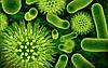 Бак.анализ воды (Санитарно-бактериологические показатели )