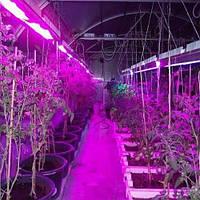 Мощный светодиод 3W, широкого спектра 400-840 nm для роста растений
