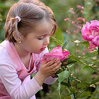 Ваша Троянда