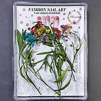 Сухоцветы для дизайна ногтей №1
