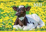 Календар квартальний (3-пружинний) Символ року 2021, фото 2