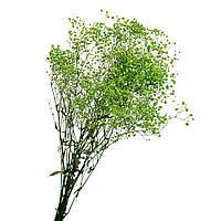 Гипсофила стабилизированная (салатовая) 78 см