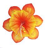 Прес-квітка Нарцис павич 14 см (560 шт в уп ), фото 4