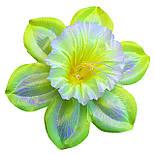 Прес-квітка Нарцис павич 14 см (560 шт в уп ), фото 5