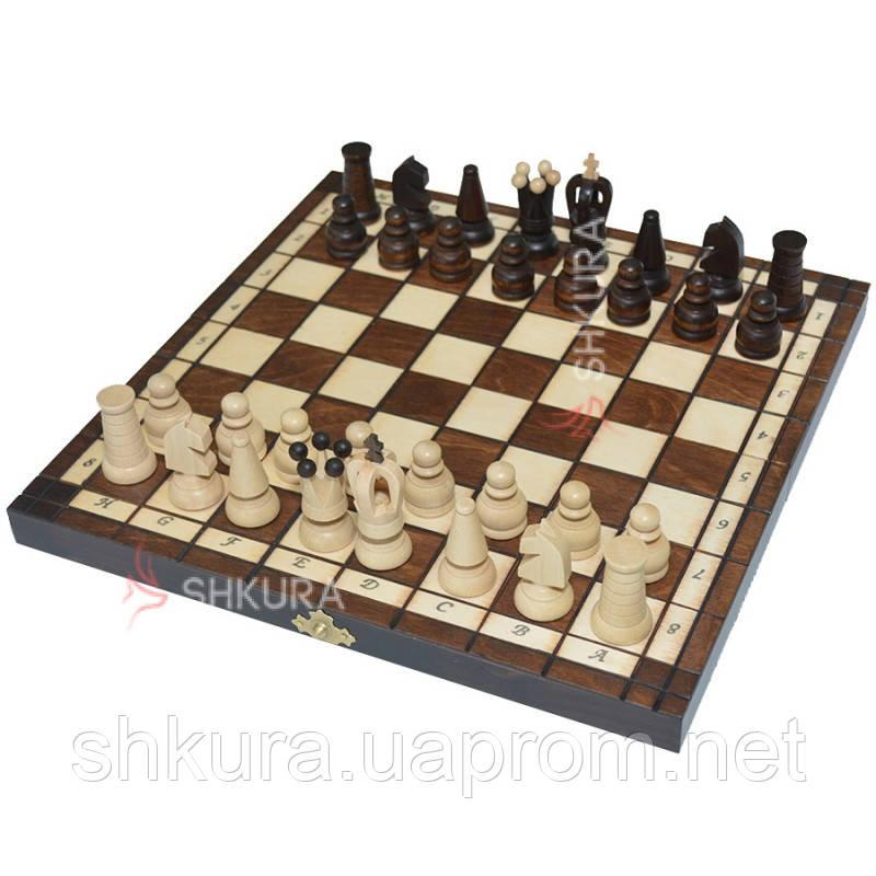 Шахматы + шашки, 31х31 см
