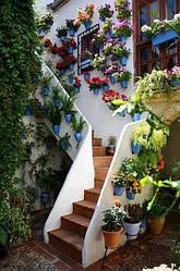 Вазоны, кашпо, горшки для рассады, вазы, балконные ящики