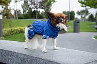 Комбинезон и куртка для собак Чикаго