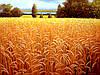 Картина пшеничное поле