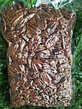 Пекан карамельний чищений горіх Америка 1 кг, фото 8