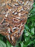 Пекан карамельний чищений горіх Америка 1 кг, фото 9