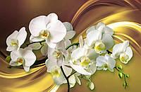 Фотообои Ветки с орхидеями