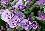 Роза чайно-гибридная Сиреневый туман, фото 3