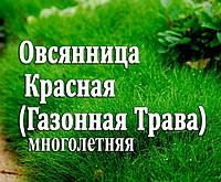 Семена Овсянница Красная (Газонная трава), 1 кг (на развес)
