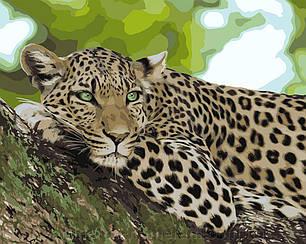 Картины по номерам - Отдых хищника   Идейка™ 40х50 см.   KH4175