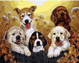 Картины по номерам - Маленькие щенки   Brushme™ 40х50 см.   GX5604