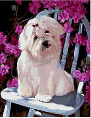 Картины по номерам - Песик и цветы   Brushme™ 40х50 см.   GX6944