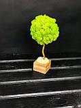 Декоративное Дерево из стабилизированного мха 25 см. Декор дома офиса Оригинальный корпоративный, фото 2