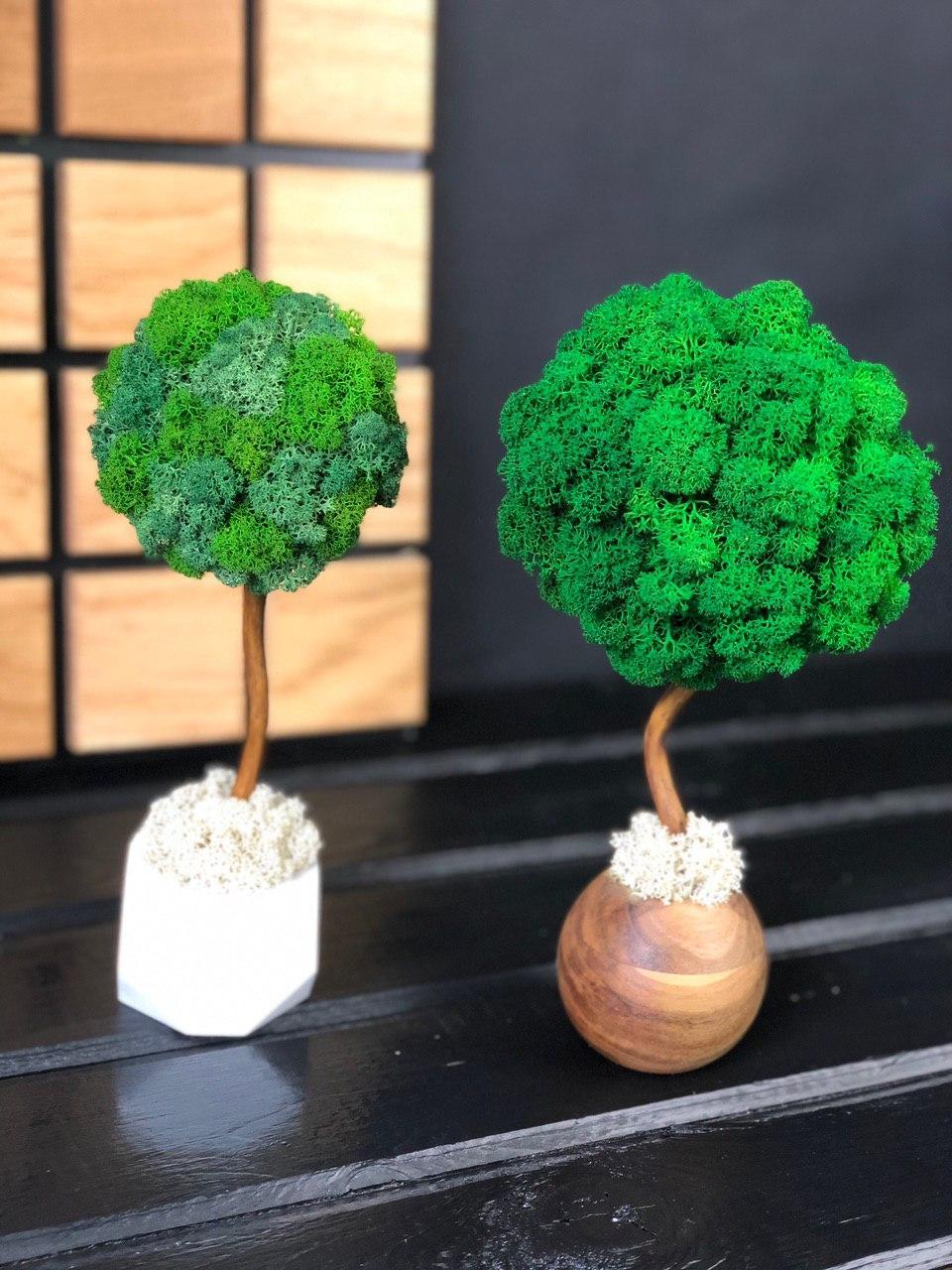 Декоративное Дерево из стабилизированного мха 25 см. Декор дома офиса Оригинальный корпоративный