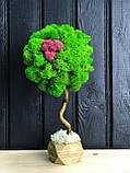 Декоративное Дерево из стабилизированного мха 25 см. Декор дома офиса Оригинальный корпоративный, фото 4