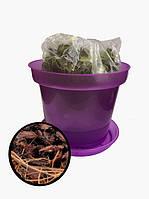 Комплект для пересадки орхидей с субстратом круглый фиолетовый