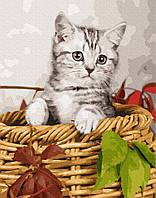 Картина по номерам Котенокв корзинке, фото 1