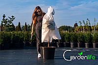 """Чехол для укрытия растений 300х60 """"РУКАВ"""" GARDENLIFE"""
