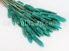 Лагурус - сухоцвет цветной, тиффани  (упаковка - 10 веточек)
