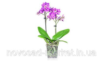 Горшки для орхидеи TEKU -  это правильный выбор для Вашего успеха!