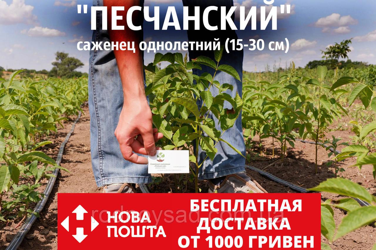 "Саженцы грецкий орех сорт ""Песчанский"" сеянцы"