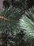 Сосна зеленая с белыми кончиками 2м, фото 4