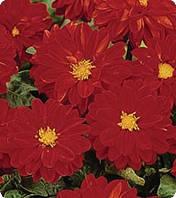 Семена цветов Георгины Red 250 семян